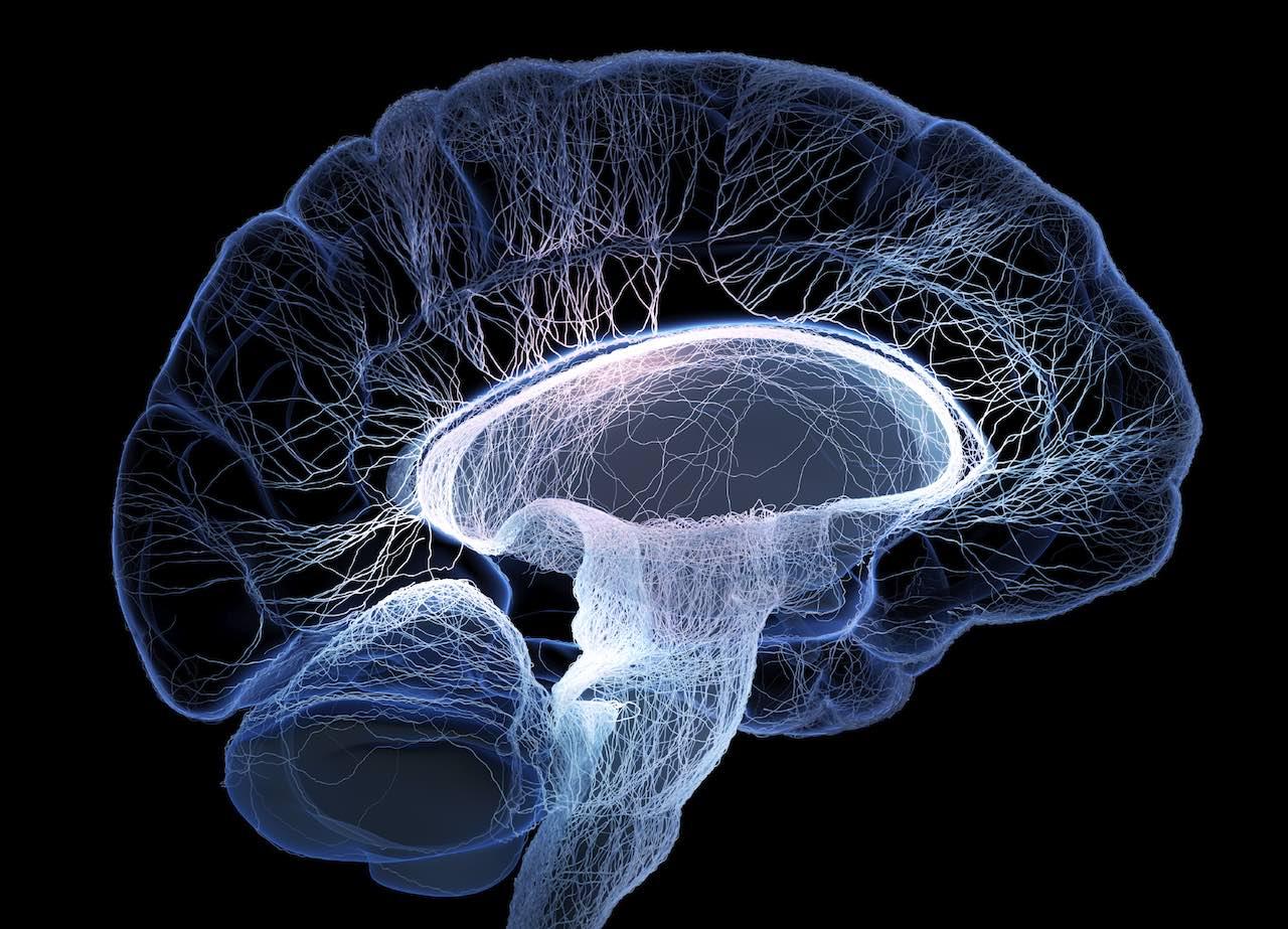 Porr förändrar hjärnan
